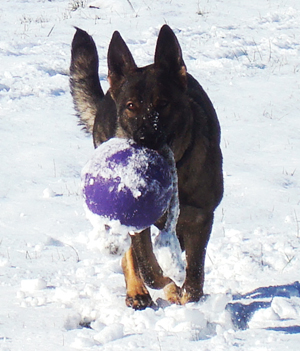 Biehla_Snow with ball