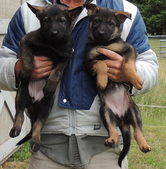 Eina Norbo Females Purple Left Pink on Right 7wks