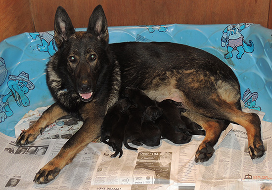Ester with X Litter Newborn