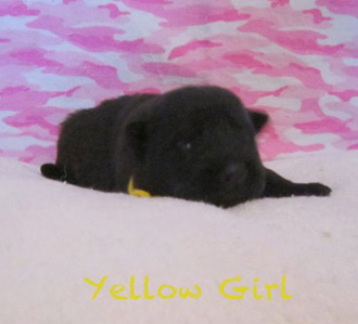 Yellow girl 2 wks 1