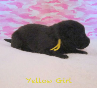 Yellow Girl 2 wks 2