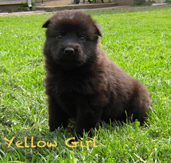 Yellow Girl 4 wks